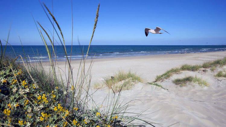 La playa L'Aigua Blanca se encuentra en el municipio de Oliva, perteneciente a la provincia de Valencia y a la comunidad autónoma de Comunidad Valenciana