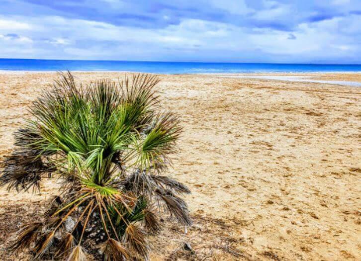La playa Prat d'En Forés i Regueral se encuentra en el municipio de Cambrils, perteneciente a la provincia de Tarragona y a la comunidad autónoma de Cataluña