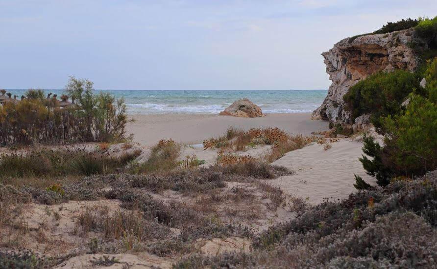 La playa Son Bauló se encuentra en el municipio de Santa Margalida, perteneciente a la provincia de Mallorca y a la comunidad autónoma de Islas Baleares